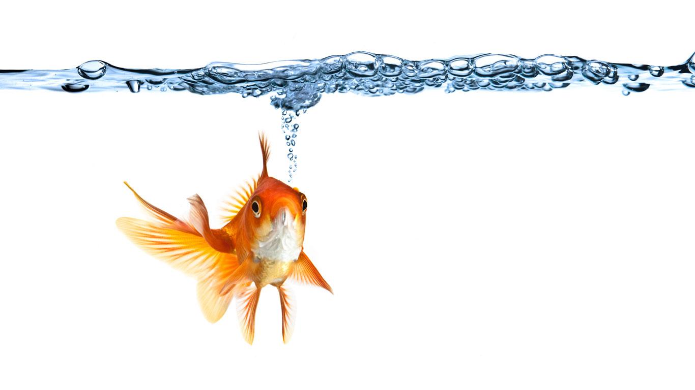 Wie trinken fische