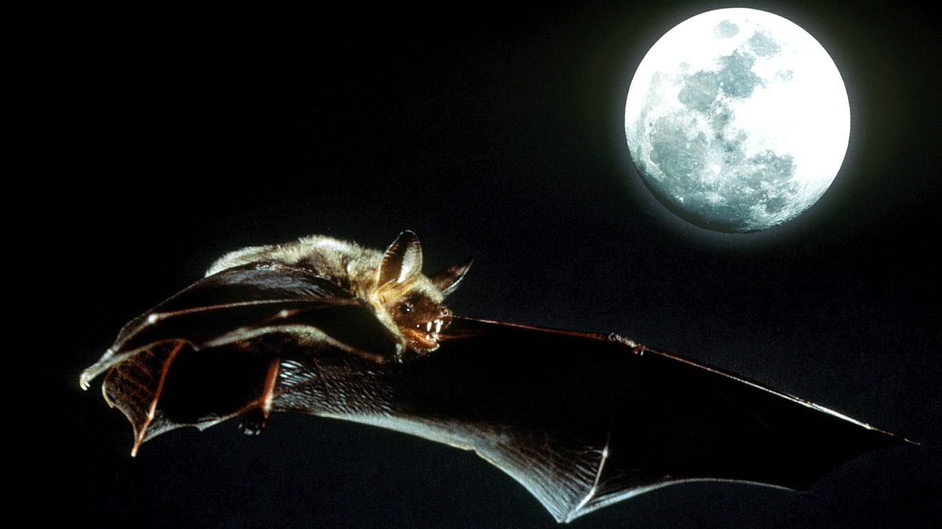 Vampire Ficken Nachts Um