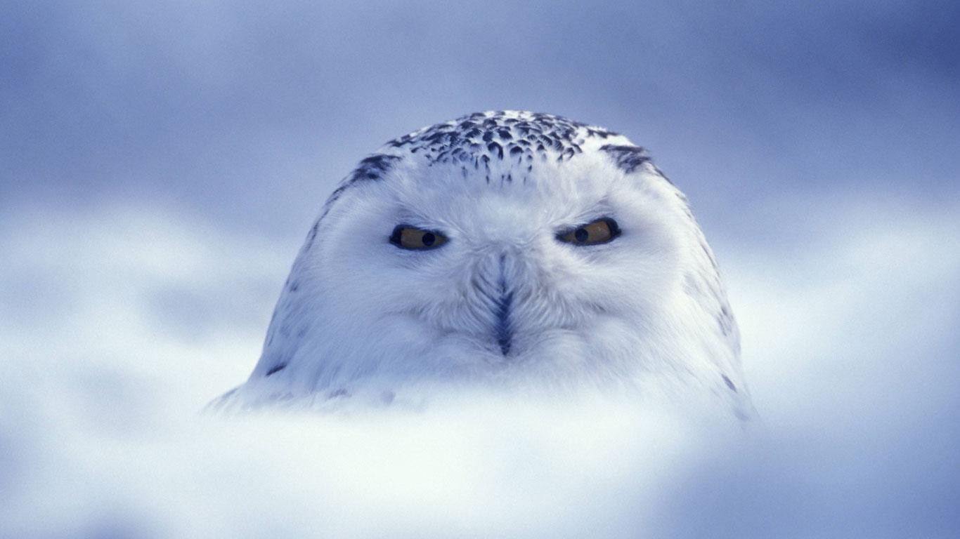 Gemeinsame Malvorlagen Tiere Arktis ~ Die Beste Idee Zum Ausmalen von Seiten @IO_69