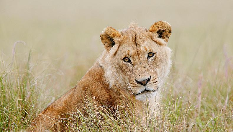 Verlierer: Löwen