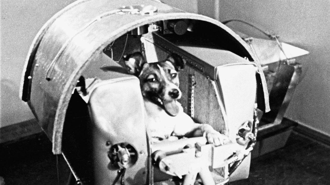 2. November 1959: Laika