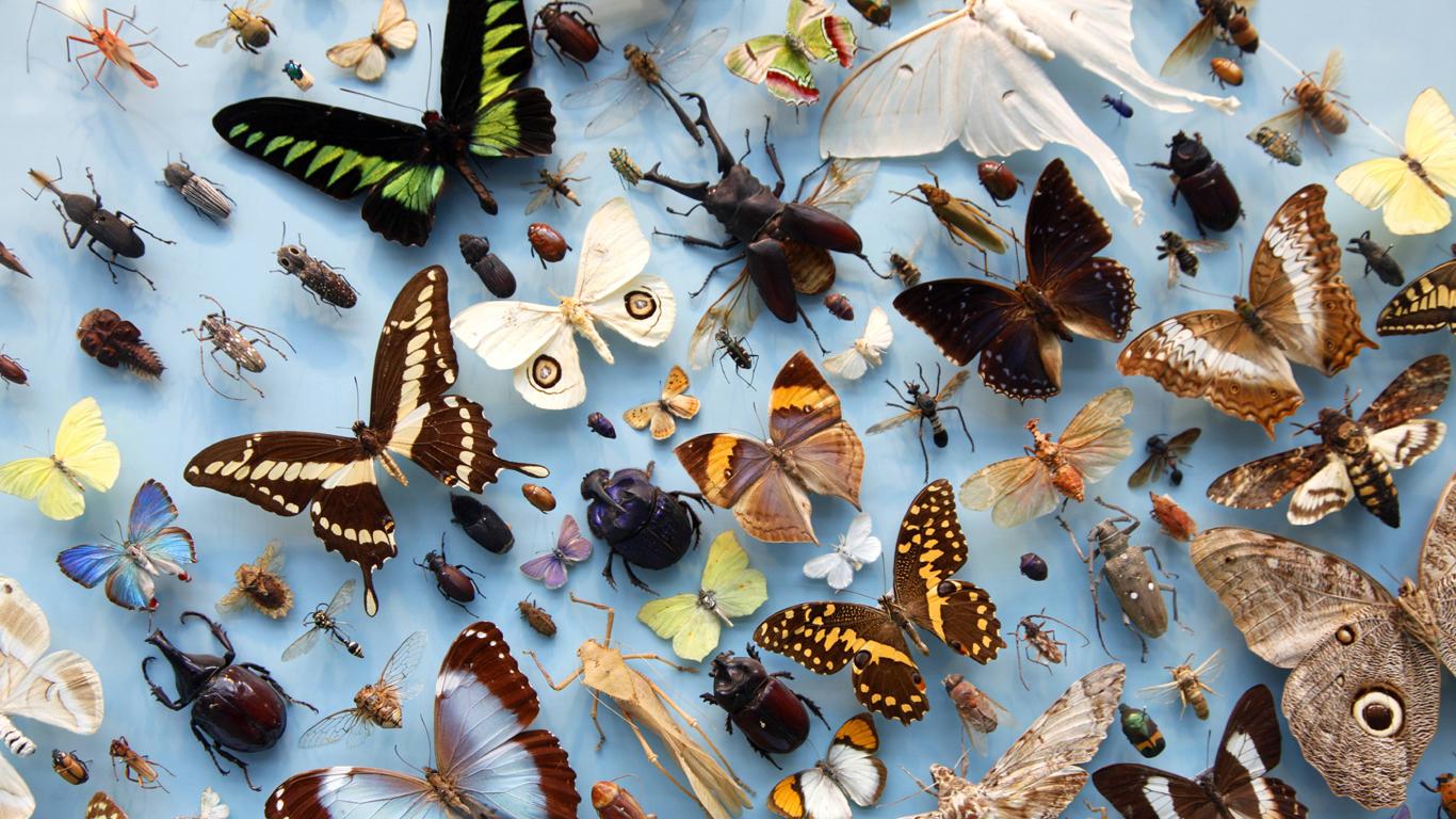 Das Sterben der Arten