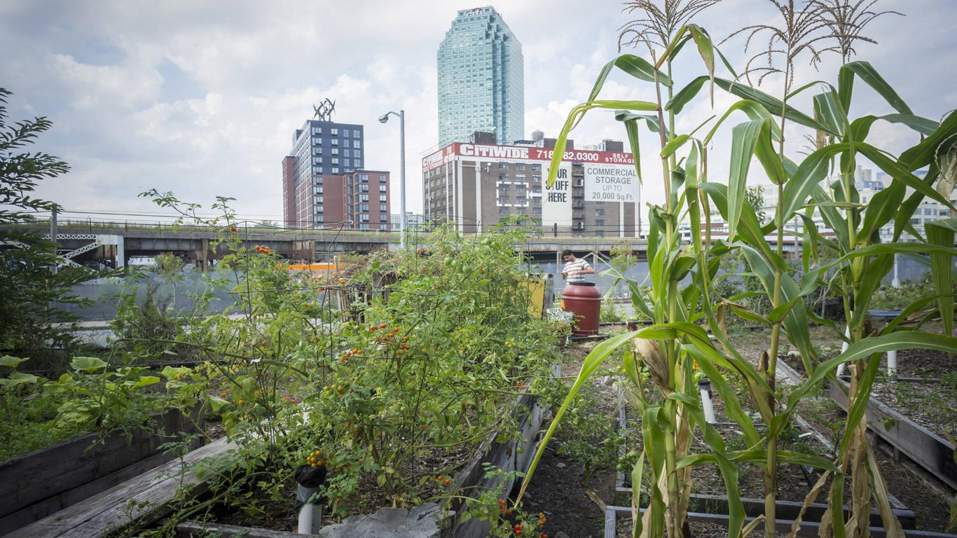 Urbanes Gärtnern über den Dächern der Stadt