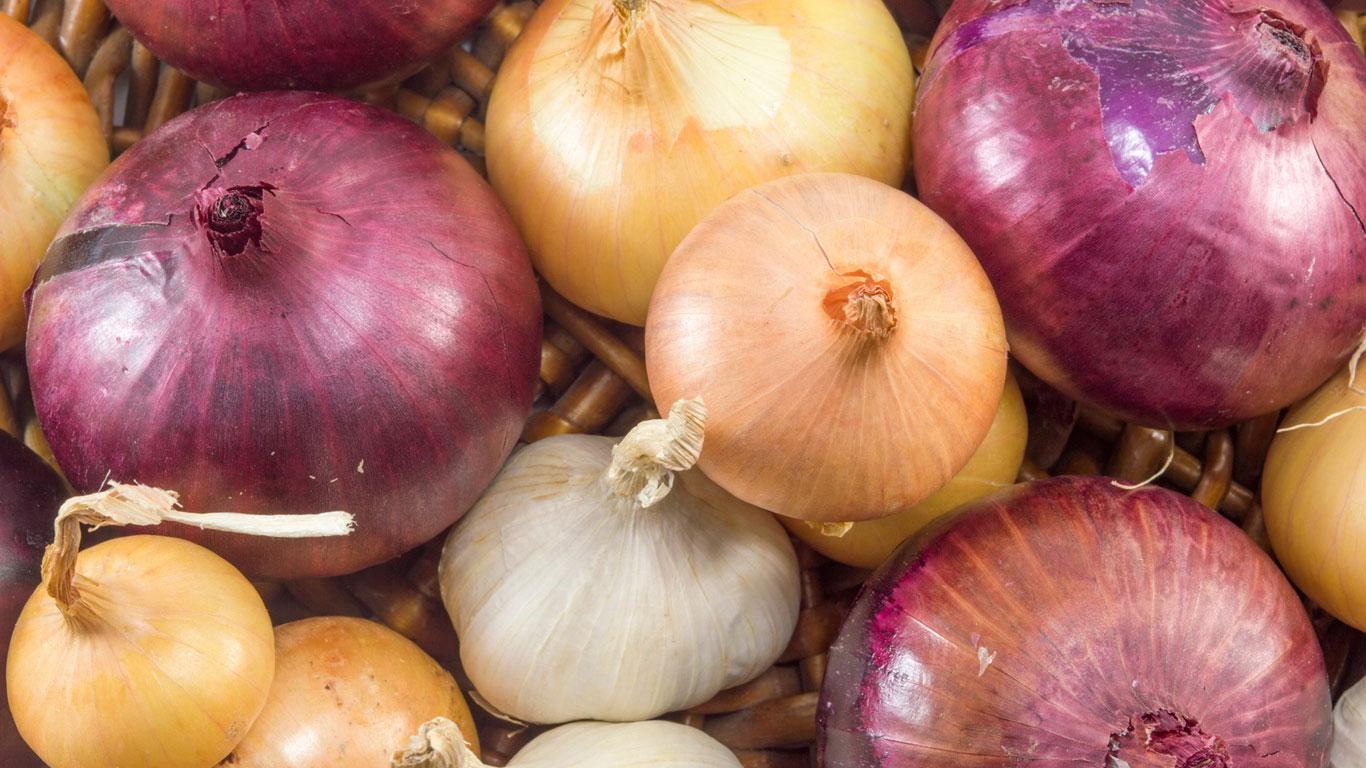 Zwiebeln: kühl und trocken lagern