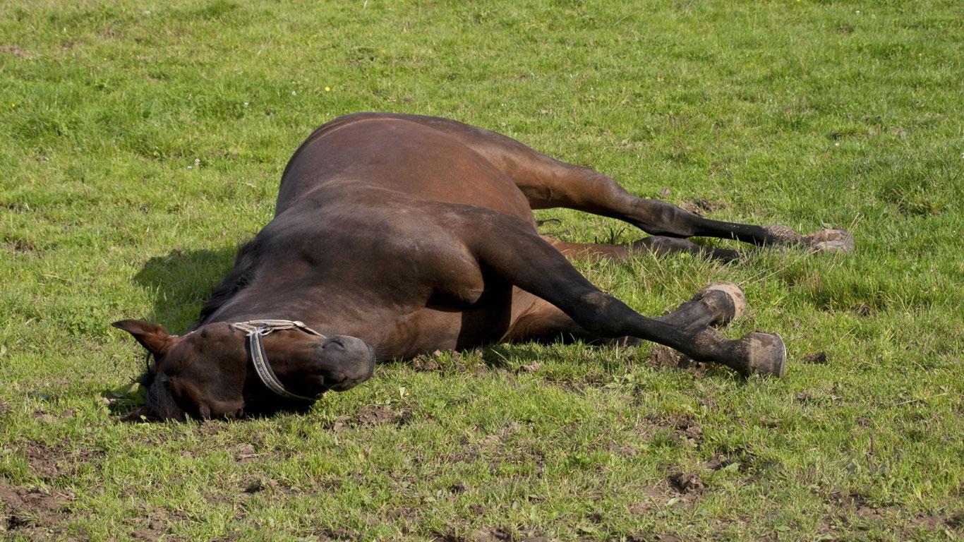 schlafen pferde im stehen welt der wunder tv. Black Bedroom Furniture Sets. Home Design Ideas