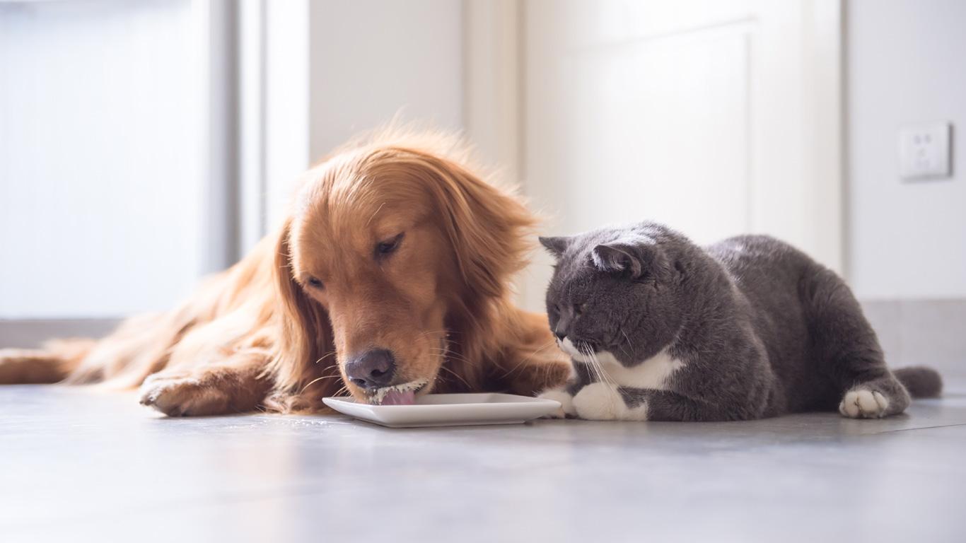 Stimmt Es Dass Hunde Keine Milch Vertragen Welt Der Wunder Tv