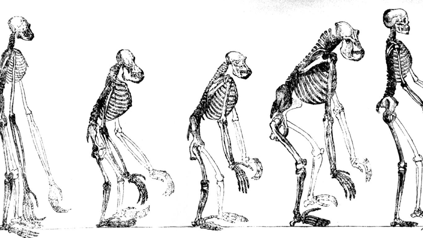 Gemeinsame Vorfahren