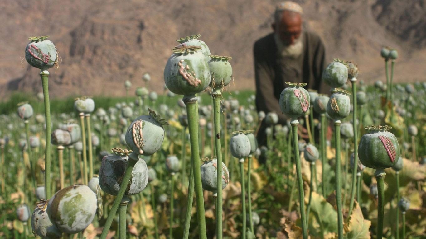 Förderung des Drogenhandels als strategische Waffe