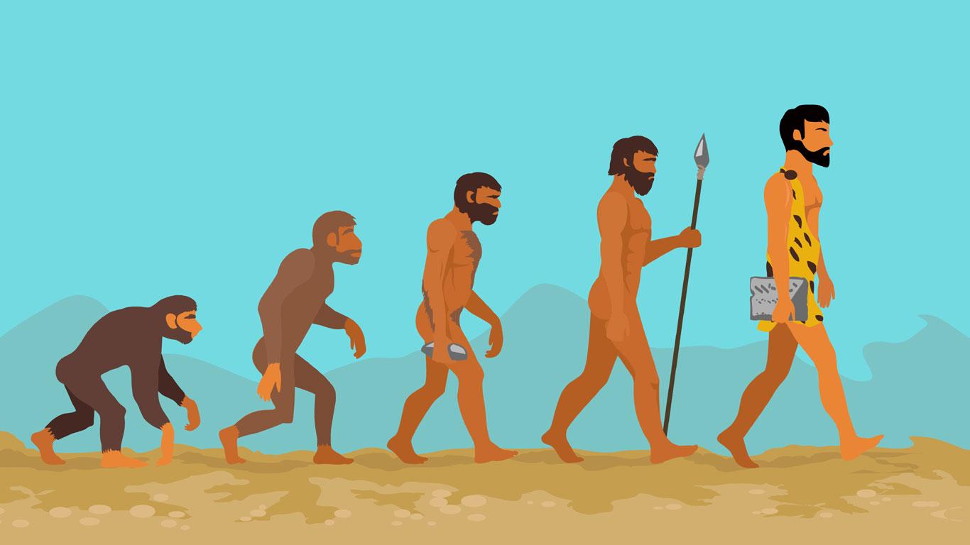 Der Mensch stammt vom Affen ab