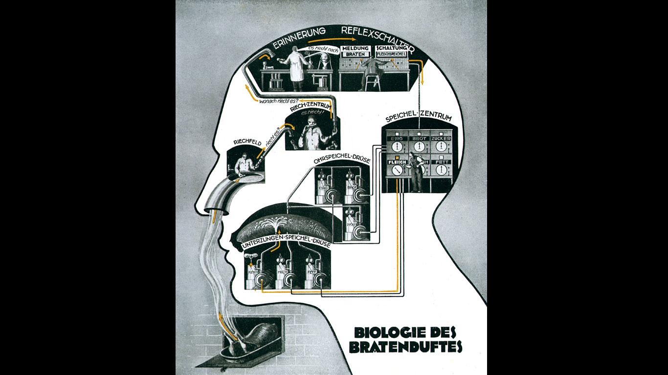 Biologie des Bratenduftes (1926)