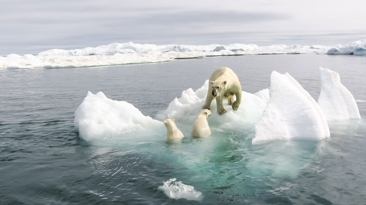 Wird der Klimawandel die Erde zerstören?