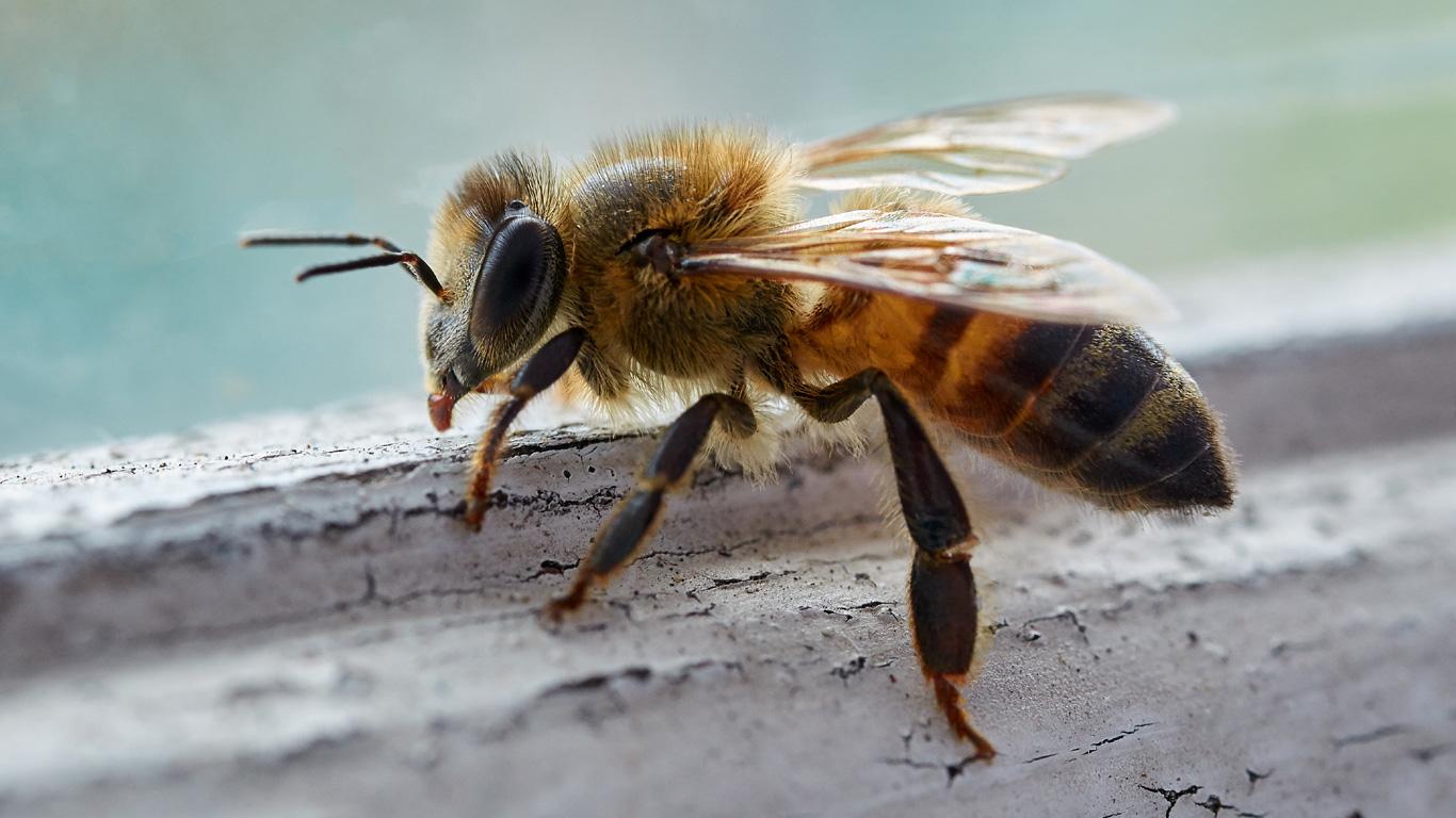 Der Geheimcode der Bienen