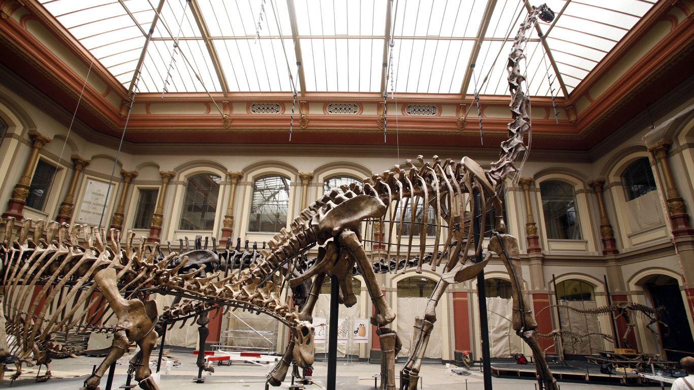 Brachiosaurus-Skelett in Berlin