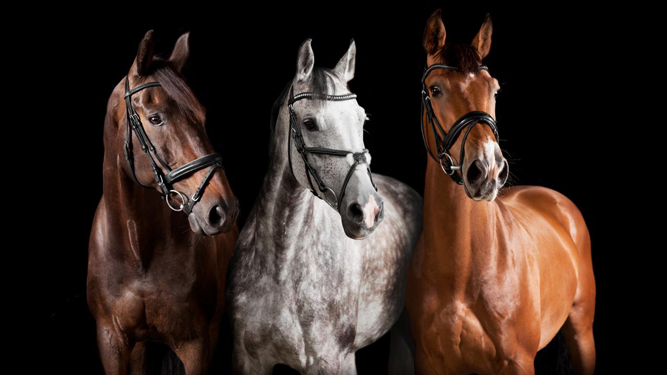 16 Millionen Dollar für ein Pferd