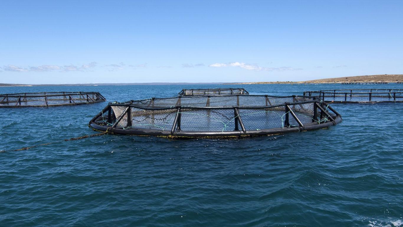 Aquakultur gegen Überfischung?