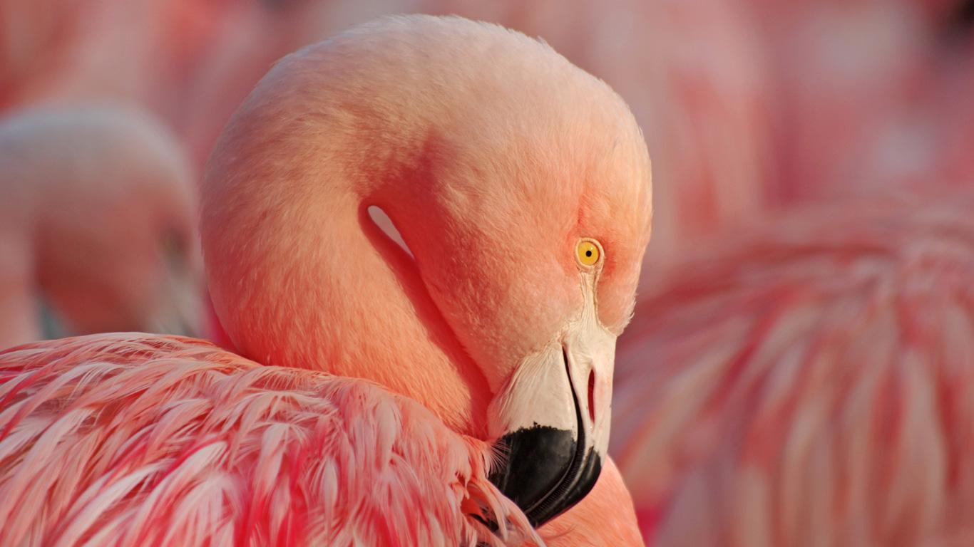 Woher haben Flamingos ihre Farbe?