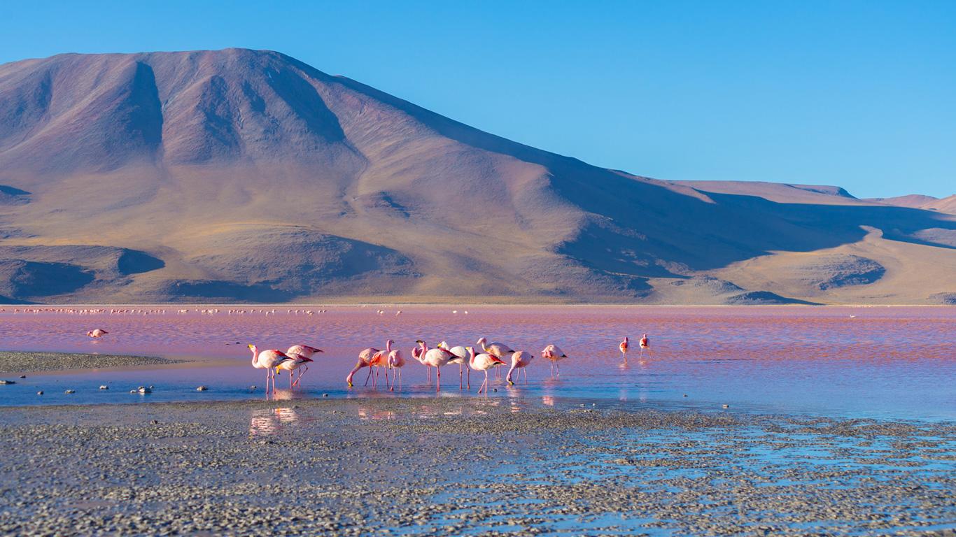 Welche Gebiete besiedeln Flamingos?