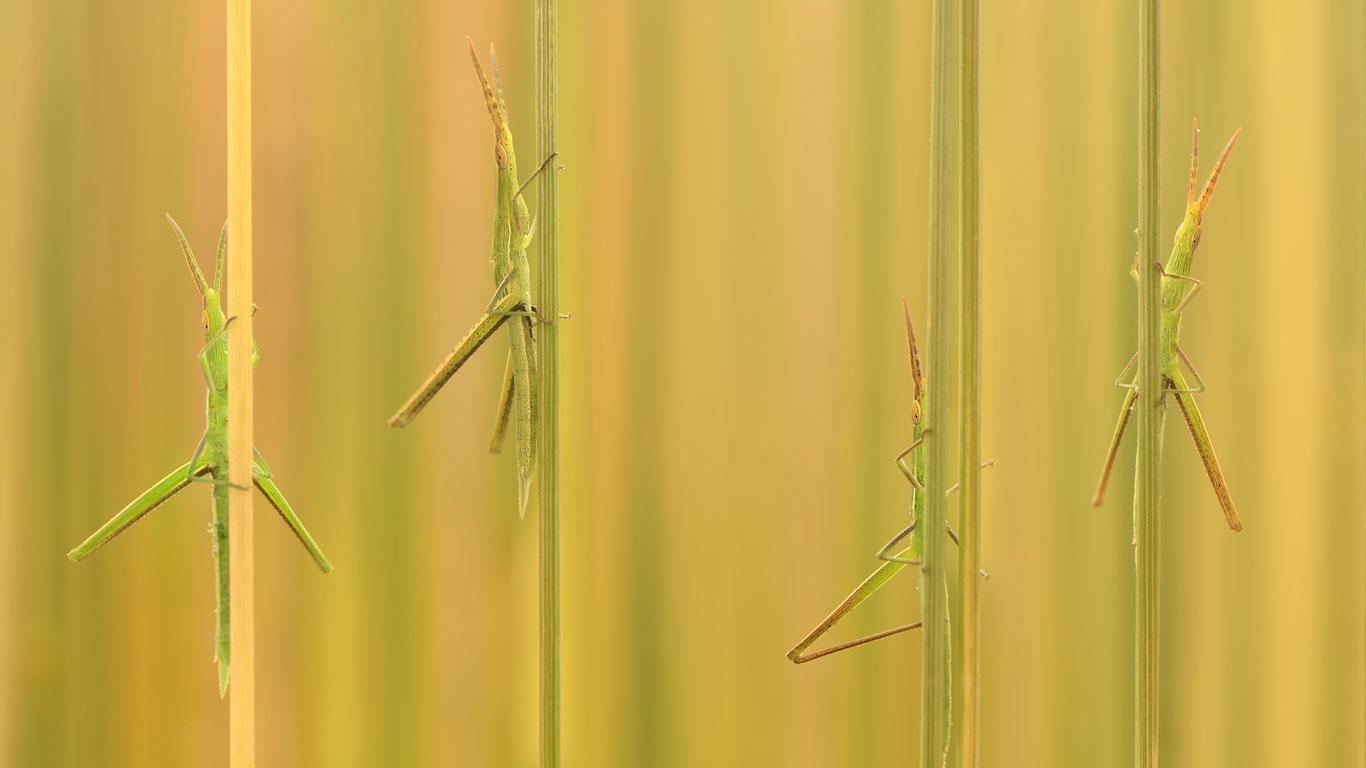 Poledance im Gras