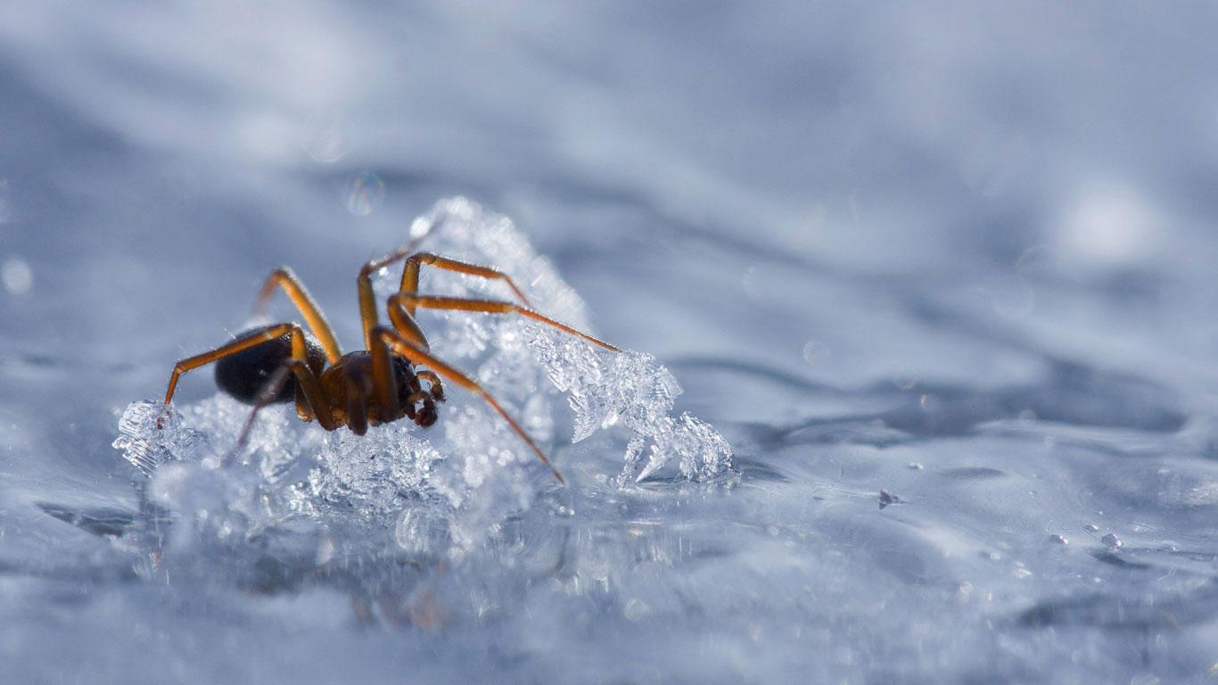 spinnen winter