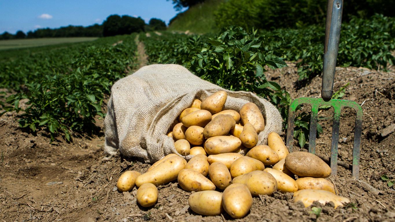 Die Feldfrüchte gehören zu den sichersten Lebensmitteln