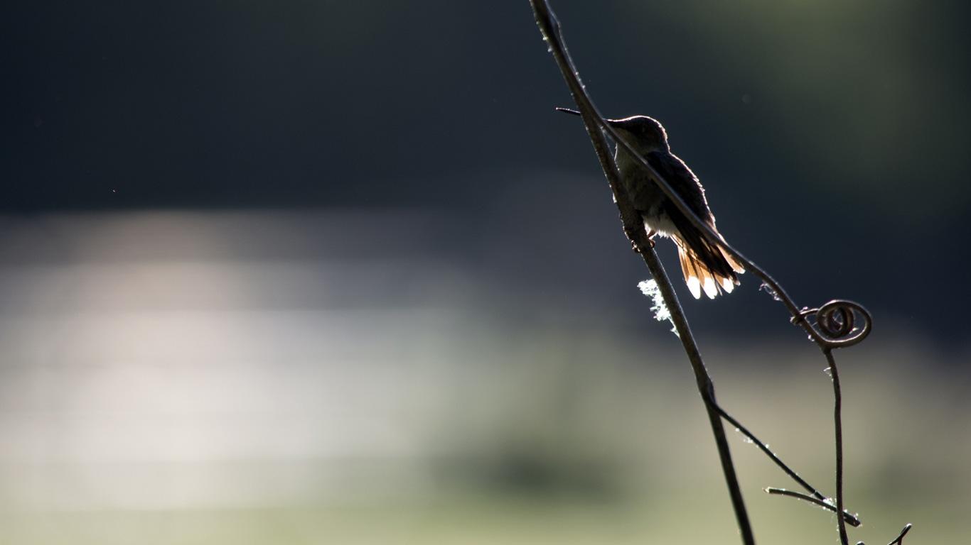 rasante sturzpiloten kolibris und ihre wilden luftman ver welt der wunder tv. Black Bedroom Furniture Sets. Home Design Ideas