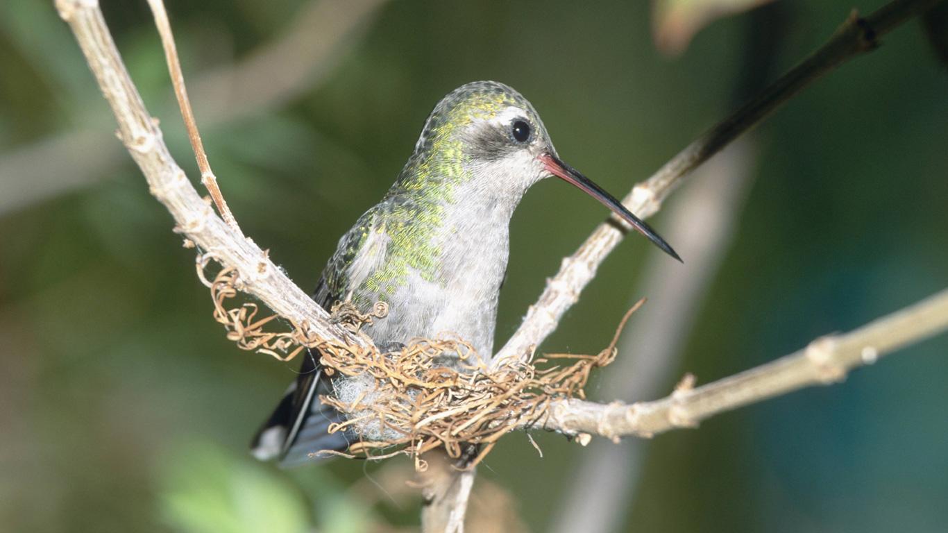 Winzige Vogelnester