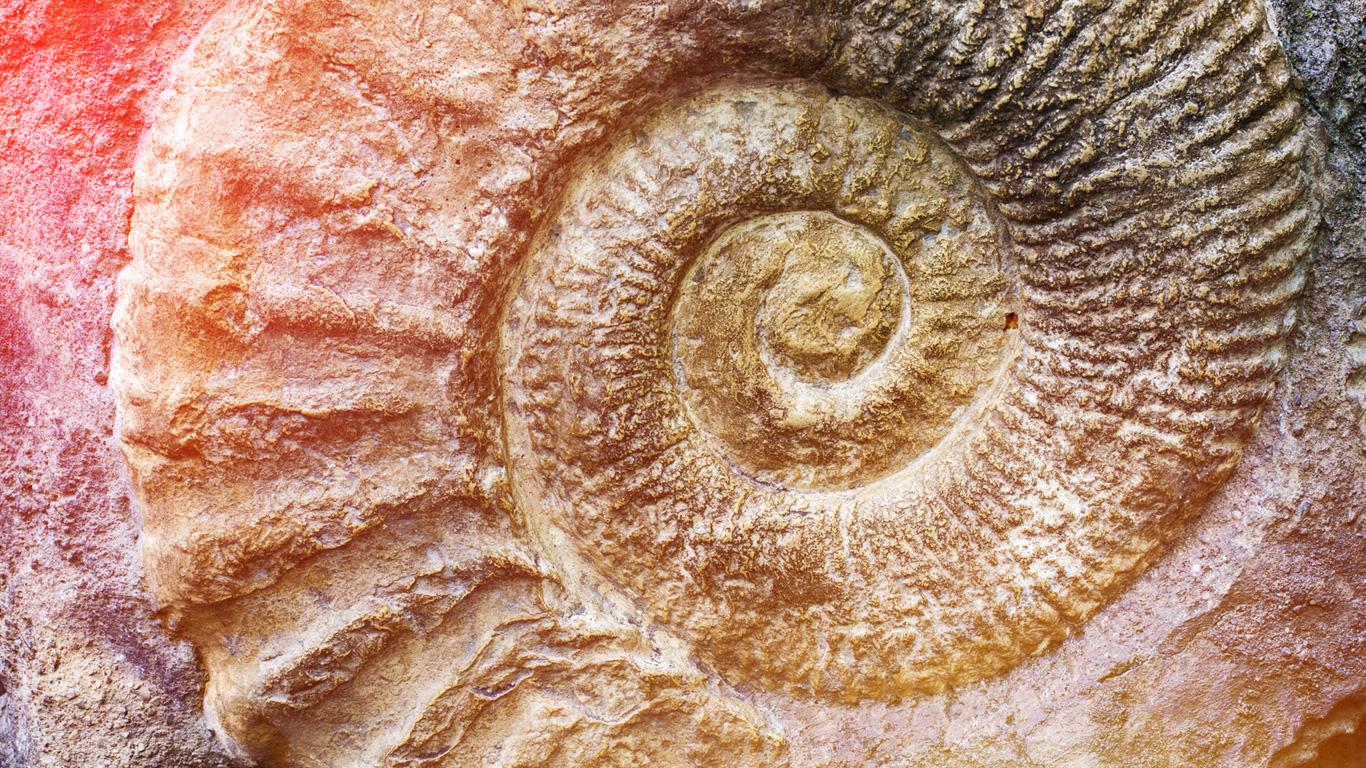 Lernen Sie die lebende Fossilien in unserer Galerie kennen!