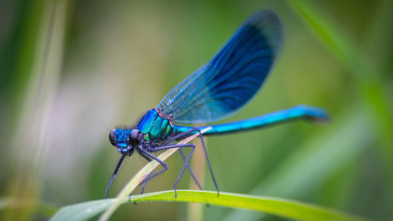 Klicken Sie sich durch die farbenfrohe Welt der Libellen!