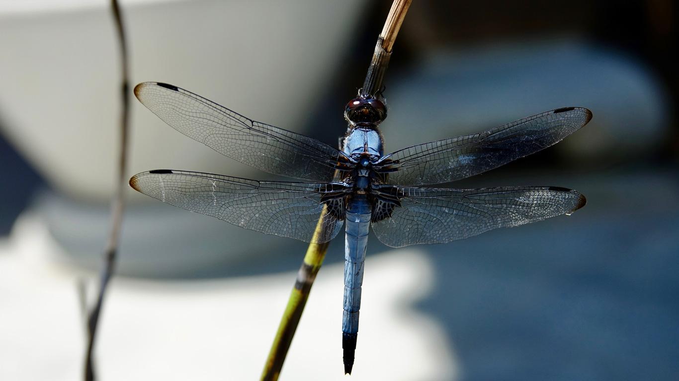 Urzeitliche Riesenflieger