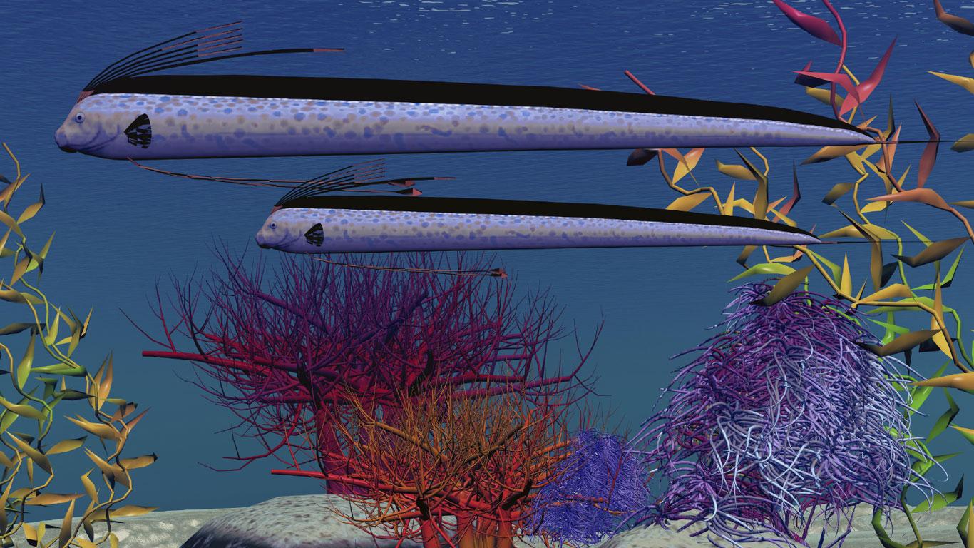 Falsche Seeschlange: Der Riemenfisch