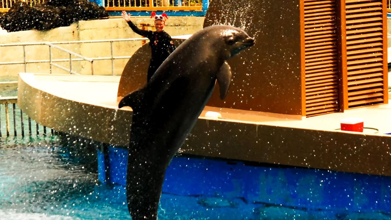 Der Wolphin