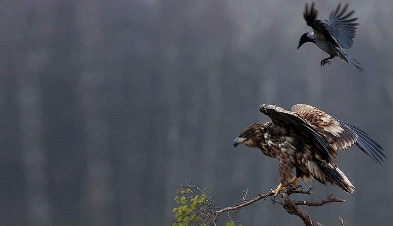 Große Auszeichnung für deutschen Naturfotografen in Schweden