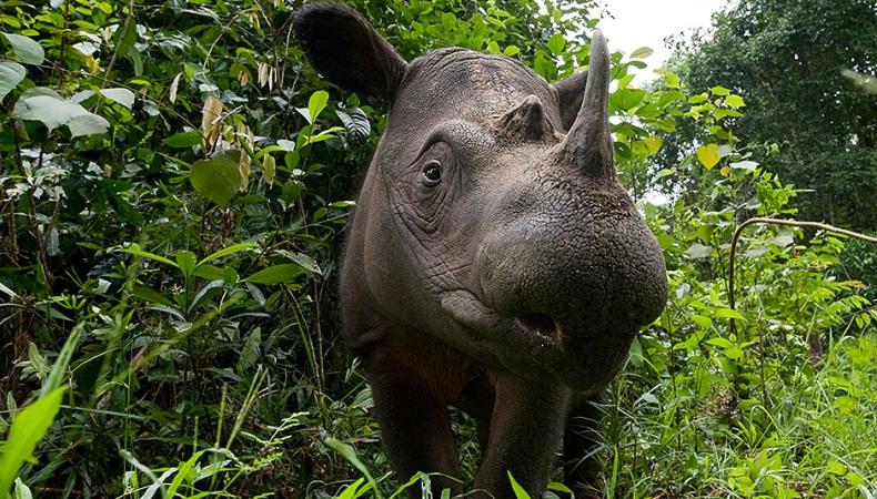 Wird es dieses Nashorn noch geben, wenn wir einmal alt sind?