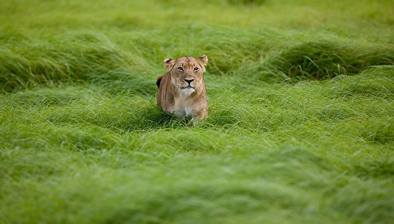 Königin im grünen Gras