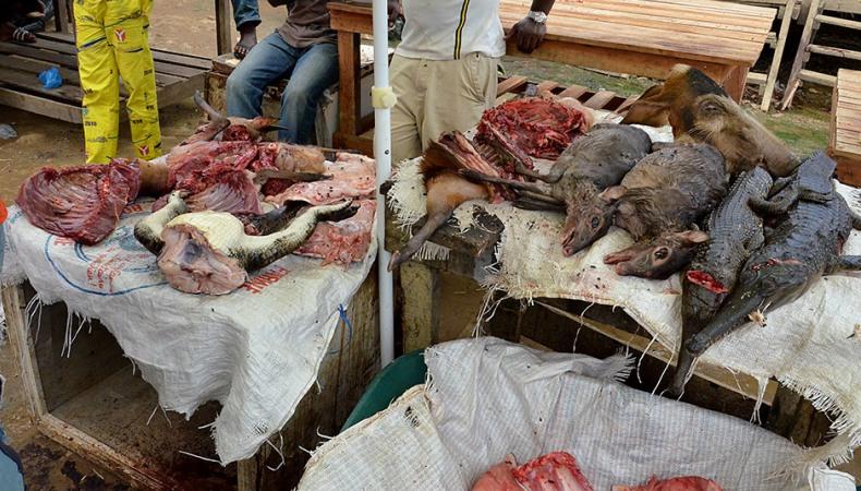 Auf dem Buschfleischmarkt