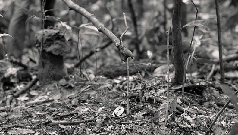 Falle im Wald