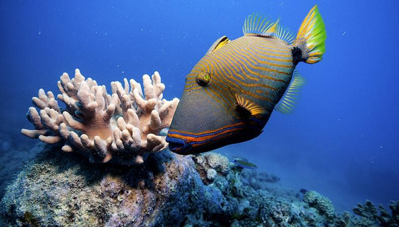 Bunter als Korallen