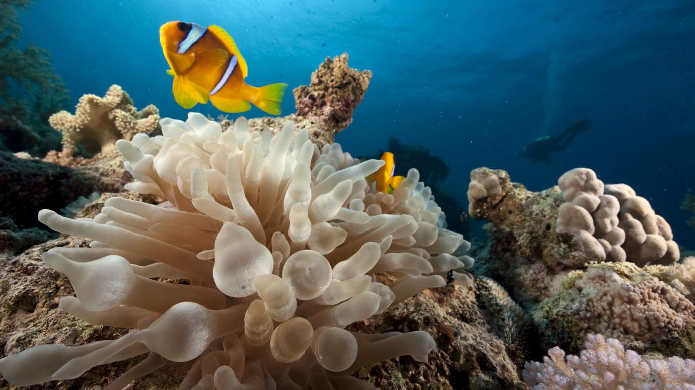 Korallen leben nur in den Tropen