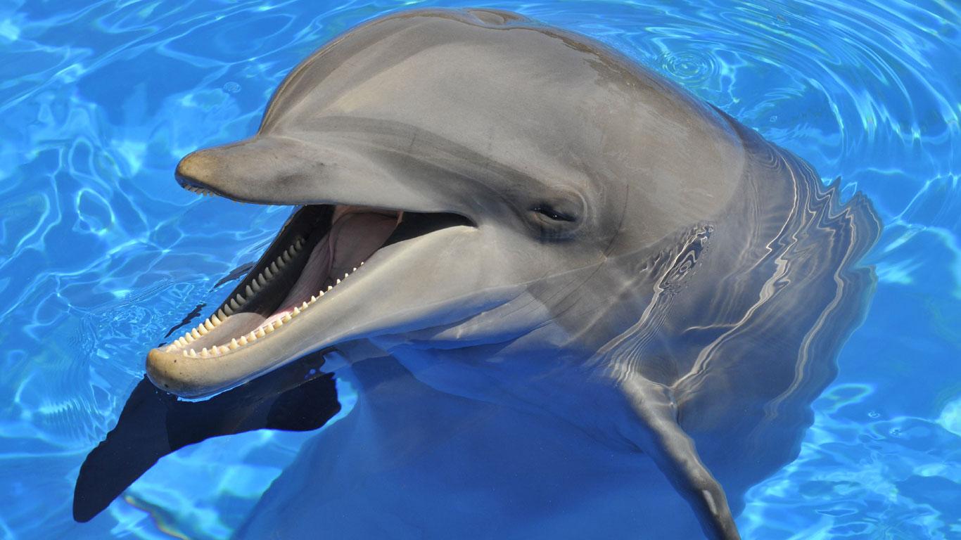 Delfine sind die intelligentesten Tiere