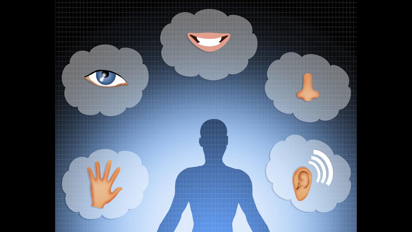 Menschen haben fünf Sinne