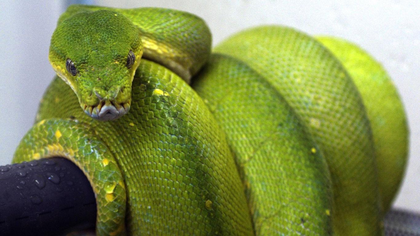 Die Schlange und das Mädchen