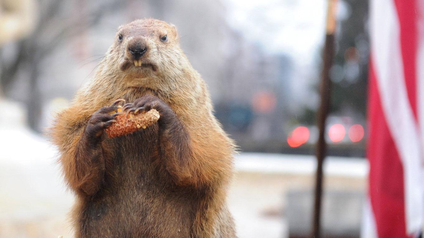 Groundhog Day: Tierischer Wetterprophet