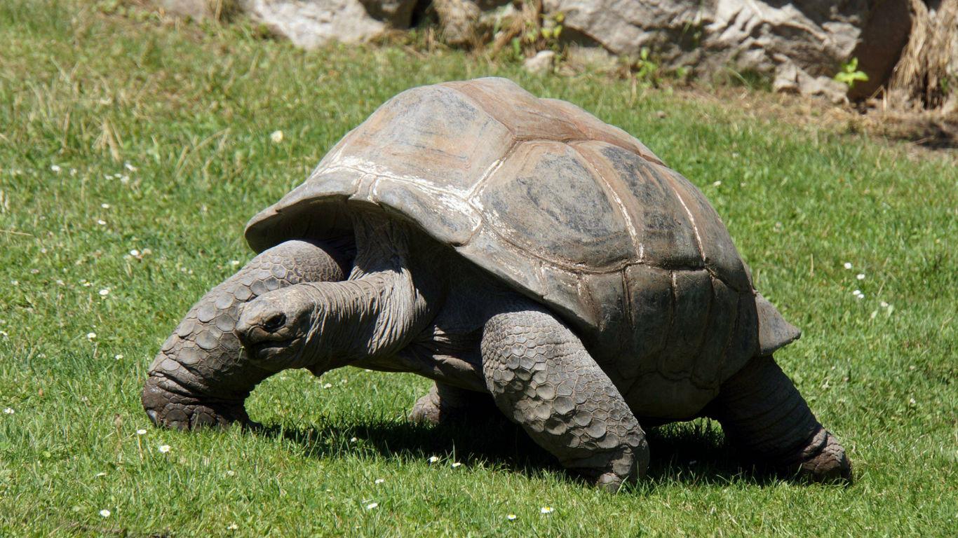 Aldabra-Schildkröte Adwaita: 256 Jahre