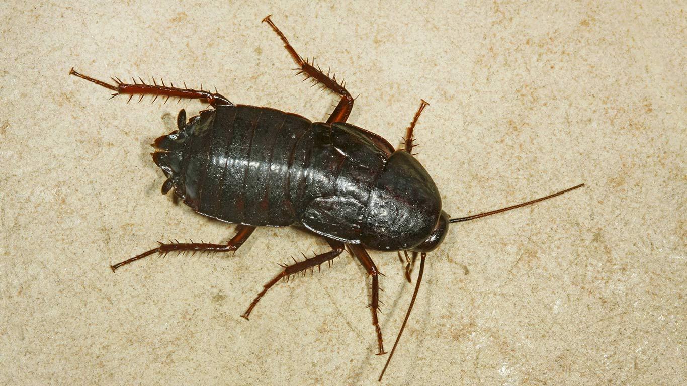 Gruseliger Kakerlaken-Schreck
