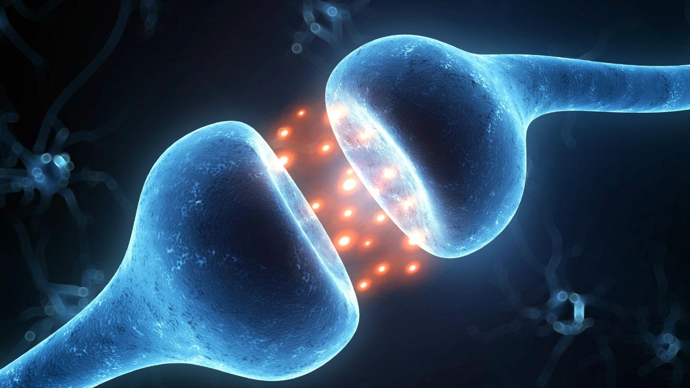 Nervenzellen können sich nicht erneuern