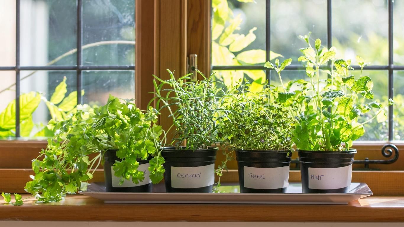 So wird die Küche zum Garten