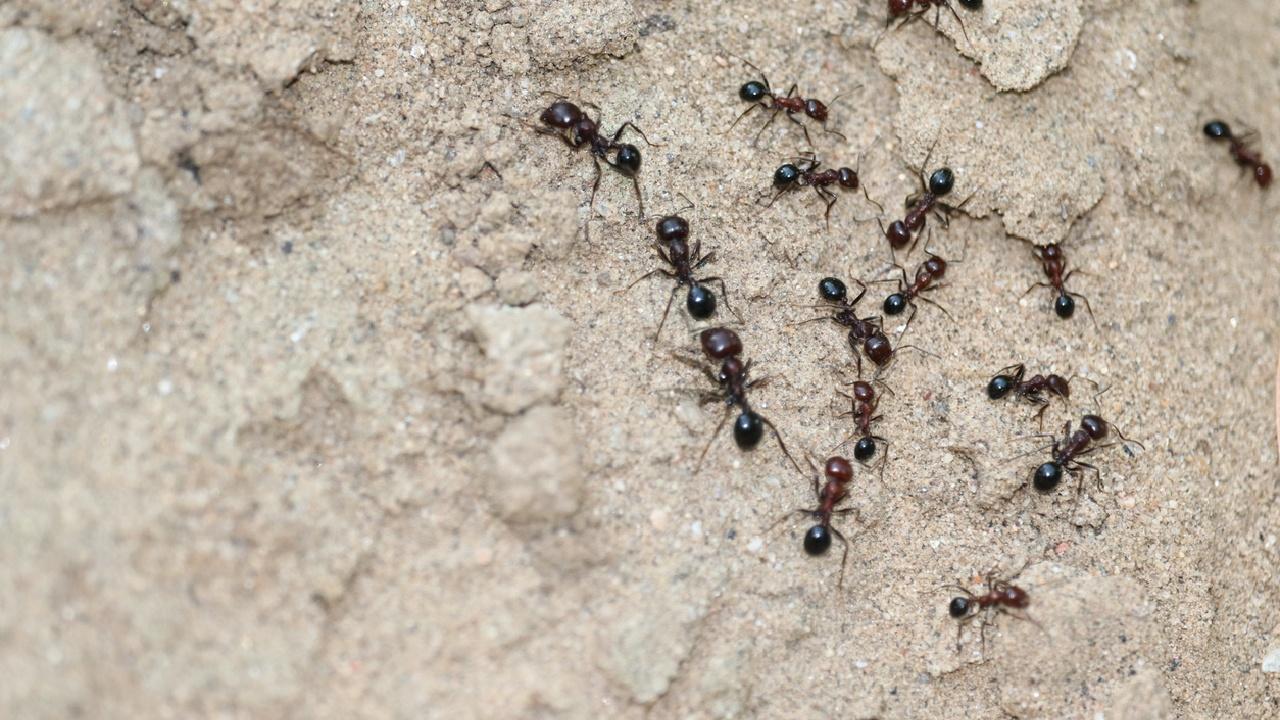 Ameisen-Straßen elegant umlenken