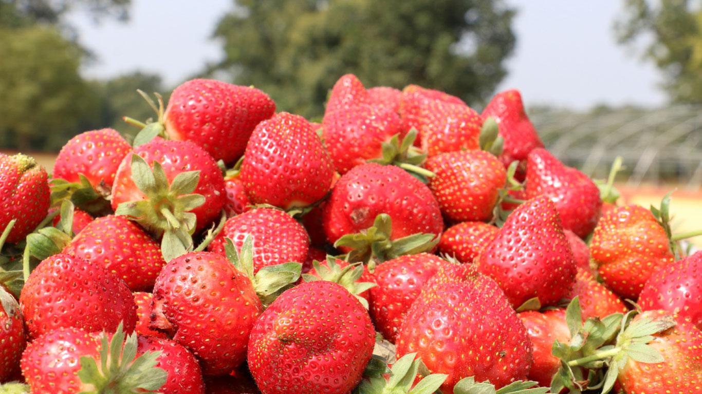Kreuzallergien bei Frühblühern