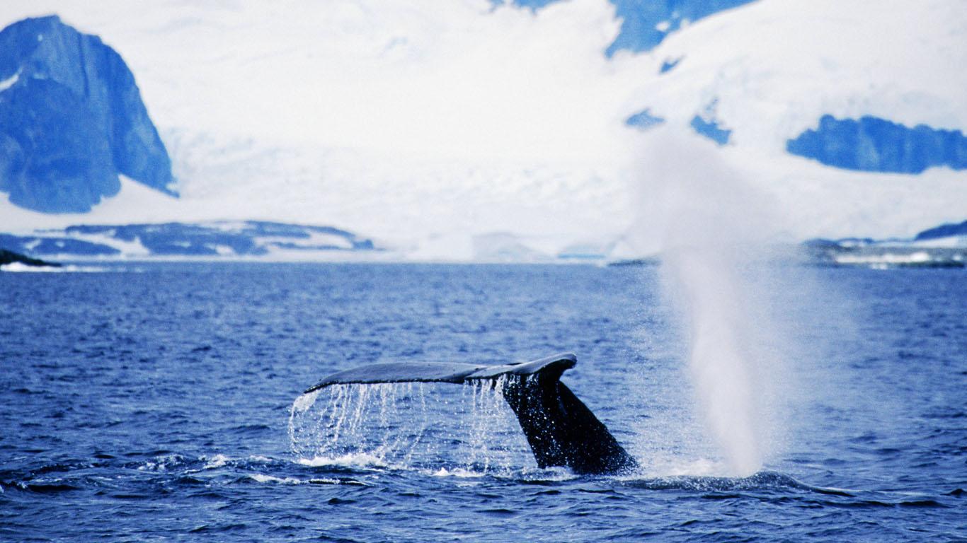 Warum ertrinken Wale im Schlaf nicht?