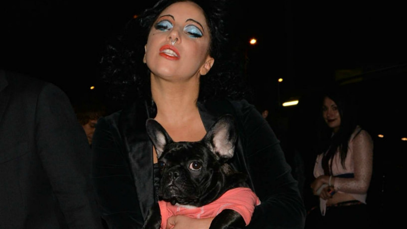 Lady Gaga kämpft mit Bulldogge